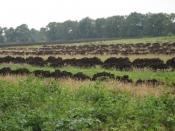 Tørveproduktionen